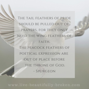 The tail feathers of prid